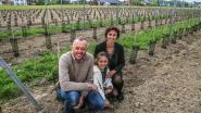 """Deerlijkse schilder wil over twee jaar eigen wijn op de markt brengen: """"Nu alleen nog een geschikte naam vinden"""""""