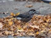 Waarom kiezen vogels vaak voor Wageningen?