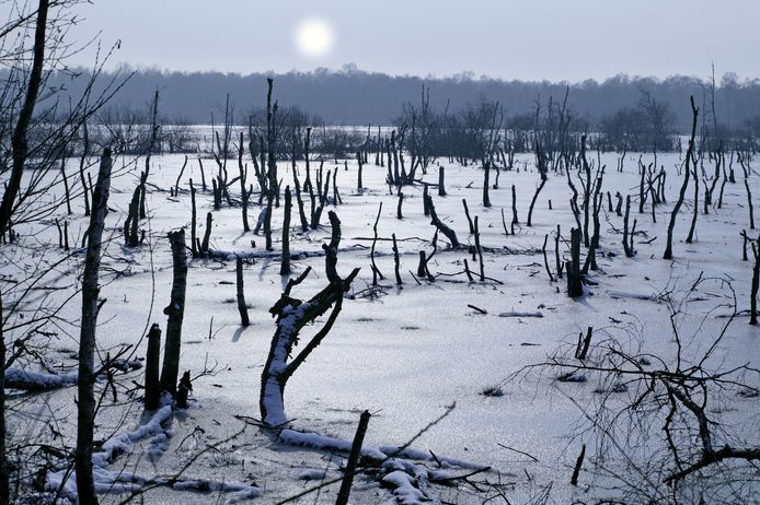 Winterlandschap in De Peel, een foto gemaakt door Ton Hartjens uit Deurne.