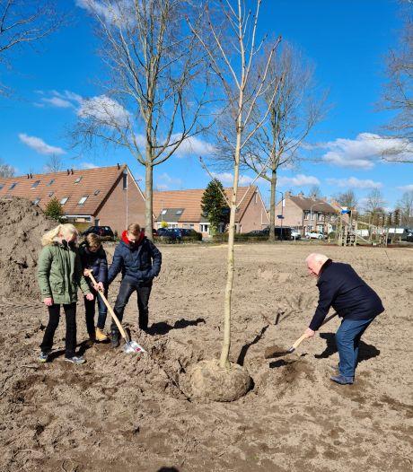Een officiële nazaat van de Anne Frankboom staat nu in Goirle
