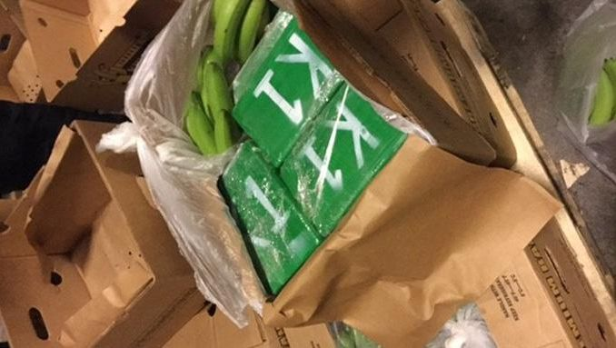 De cocaïne zat verstopt in een lading bananen, afkomstig uit de haven van Antwerpen.