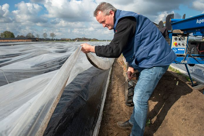 De langer uitblijvende lente zorgt voor een hogere prijs voor de asperges. Teler Corné Brenders laat de extra plastic laag zien die over de asperges wordt gelegd om de warmte beter vast te houden en hiermee dus de groei te bevorderen.