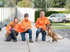Zo helpen asielhonden en tbs'ers elkaar aan plek in samenleving