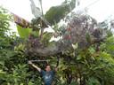 Philippe Fernandez-Fournier à côté d'un grand nid d'araignées.