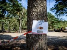 Waarschuwing voor wandelaars Lutterzand: blijf uit buurt van hoornaarsnest