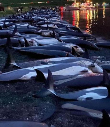 Le gouvernement des îles Féroé défend la mise à mort de 1.400 dauphins lors d'une chasse traditionnelle