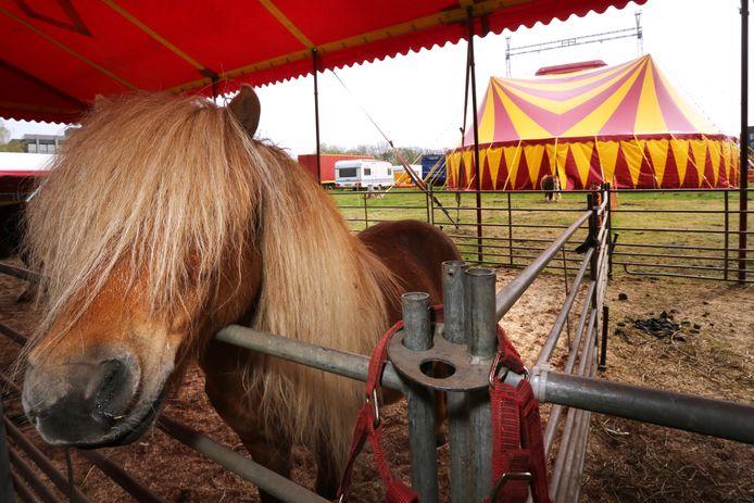 Familiecircus Barani geeft vanaf 28 juli weer voorstellingen met onder meer (boerderij)dieren, clownerie en acrobatiek in Bergen op Zoom.