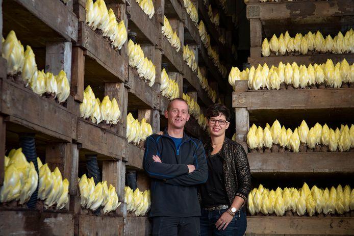 Albert en Bertine Bruins van witlofbedrijf IJssellof in de Koekoekspolder.