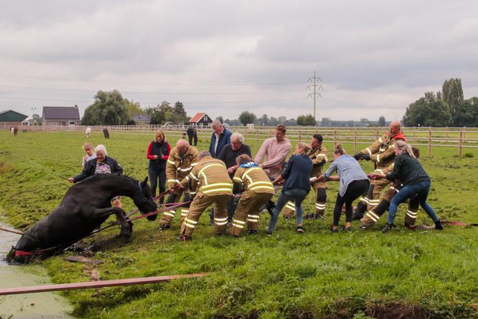 Met behulp van brandweerslangen werd het paard op het droge getrokken.