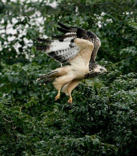 Hardenbergers vangen bot met verzet tegen wandelpad langs nest met buizerds in Rheezermaten