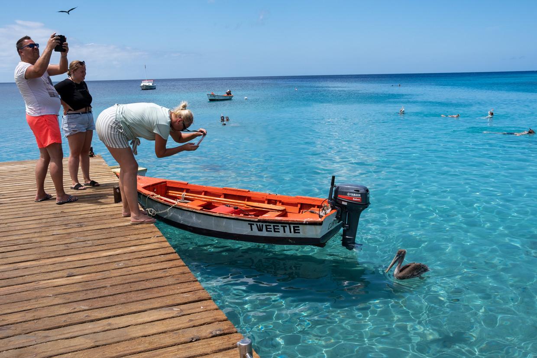 Playa Piskadó is in trek bij vogels, snorkelaars en badgasten. Beeld Sabine Van Wechem