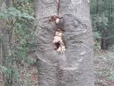Wandelaar aangevallen door hoornaar in Kaatsheuvel