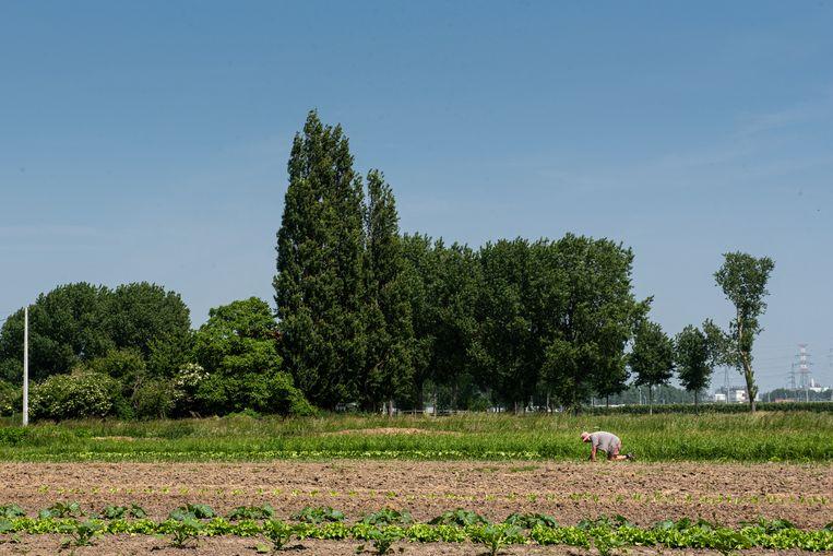 In een zone van vijftien kilometer rond de 3M-fabriek werden bij verschillende landbouwbedrijven stalen genomen van levensmiddelen. Beeld Wouter Maeckelberghe