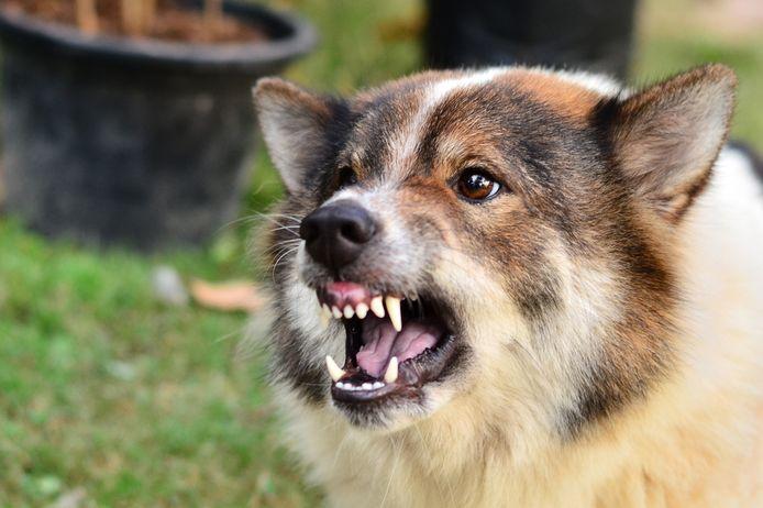 Een dreigende hond.