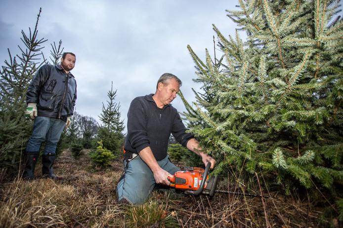 Bart Jansen, de boswachter, zaagt een boom om met zijn motorzaag.