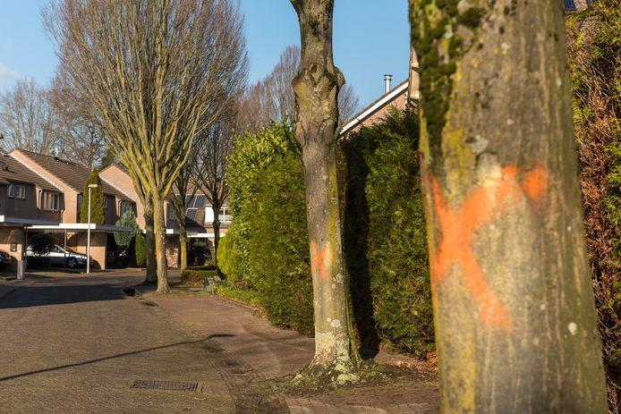 Alle twintig bomen in de Tonnekeshei die worden gerooid zijn voorzien van een oranje kruis. Buutbewoners hadden er een wit hart overheen geschilderd, maar dat is door de regen uitgelopen.