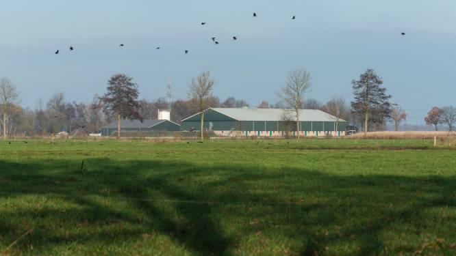 Stikstofcrisis of niet, Almelo werkt mee aan megastal met 16.000 varkens bij Aadorp (anders gaat het veel geld kosten)
