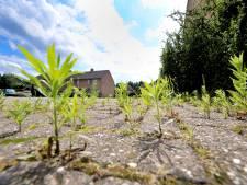 Onkruid vergaat niet: De Ronde Venen tast diep in de buidel om woekerende planten te bestrijden