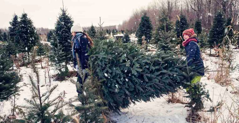 Dit Is Het Beste Moment Om Een Kerstboom Te Kopen