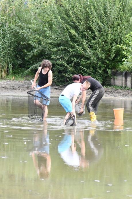 Kinderen redden honderden vissen in nood uit vijver in Etten-Leur