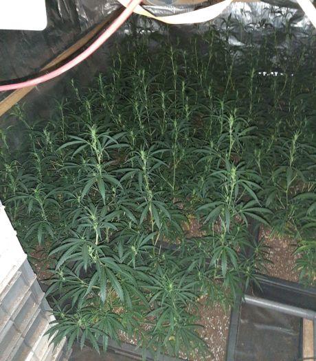 Woning in Budel drie maanden dicht na vondst 390 wietplanten in naastgelegen bedrijfspand; rechter geeft gemeente gelijk