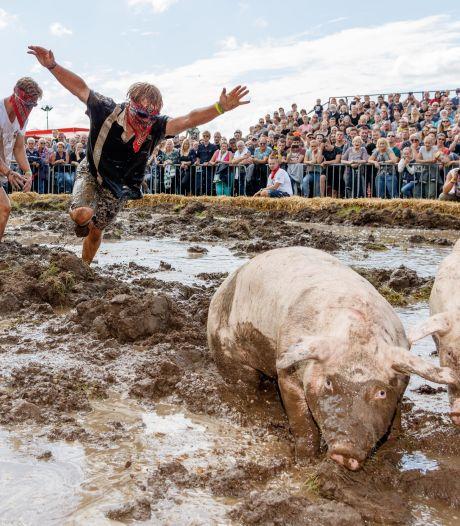 Dierenorganisaties willen verbod op zwientie tikken op Dicky Woodstock