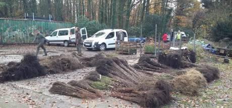 Antwerpse boseigenaars kopen massaal bomen en struiken voor hun bosrand