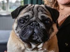 Steeds meer gemeenten schaffen hondenbelasting af, maar in Den Haag mogen hondenbezitters flink dokken