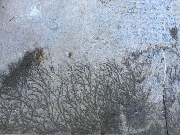 Hilde Dortmans zag hoe de winterkristallen op haar stoep een natuurlijk kunstwerkje vormden