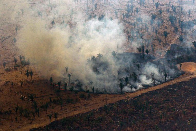 Het Amazonewoud staat al enkele weken in brand.