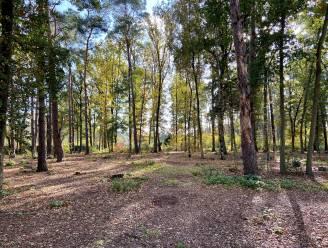 Glabbeek gaat als één van de eerste gemeenten in de ruime regio een natuurbegraafplaats realiseren