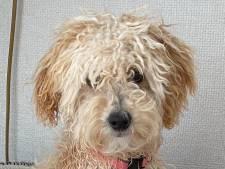 Koning Willem-Alexander en gezin hebben een nieuwe hond: Mambo