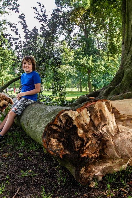 Enorme tak van beuk op de Worp breekt af, gemeente inspecteert alle bomen voor veiligheid
