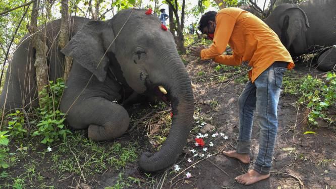 """Verdacht: onderzoek naar 18 """"doodgebliksemde"""" olifanten in India"""