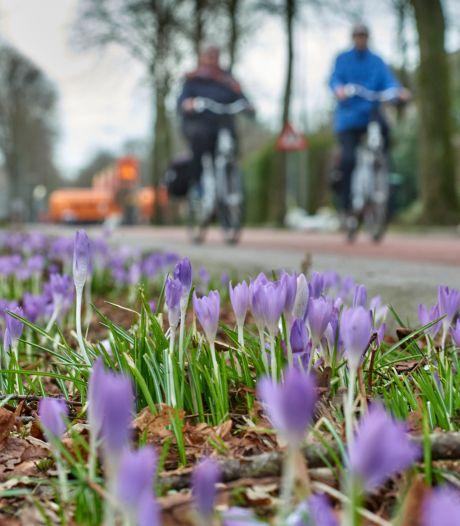 De trouwe aankondiger van het voorjaar