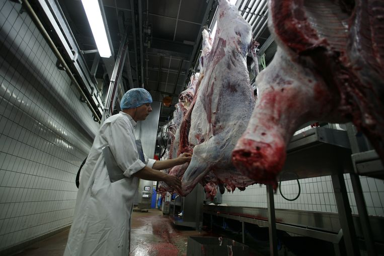 Een dierenarts keurt het vlees in het slachthuis. Voor de artsen zouden de controles op het dierenwelzijn 'slechts een nevenactiviteit' zijn. Beeld Hollandse Hoogte / Ger Loeffen