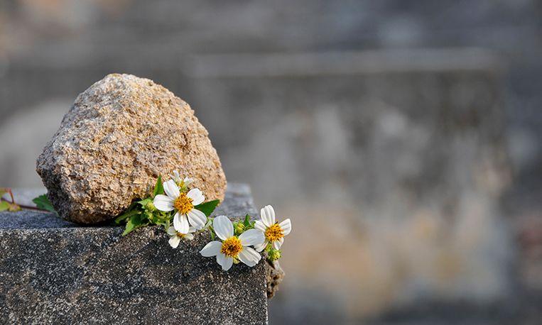 Bloemenroof op begraafplaats
