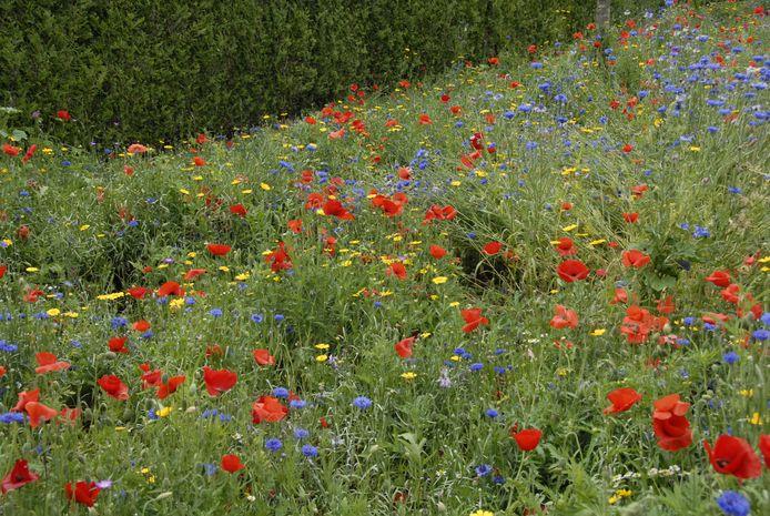 Er wordt 14.000 vierkante meter bloemenzaad ingezaaid in Boxtel en Sint-Michielsgestel.