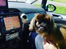 Deze hond was achtergelaten in snikhete auto in Apeldoorn en mag afkoelen in politiewagen