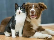 Dierenartsen slaan alarm om zieke pups en kittens die voor woekerprijzen worden verkocht: 'Echt gestoord'