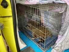 Slapende wasbeer uit boom geschoten door dierenarts