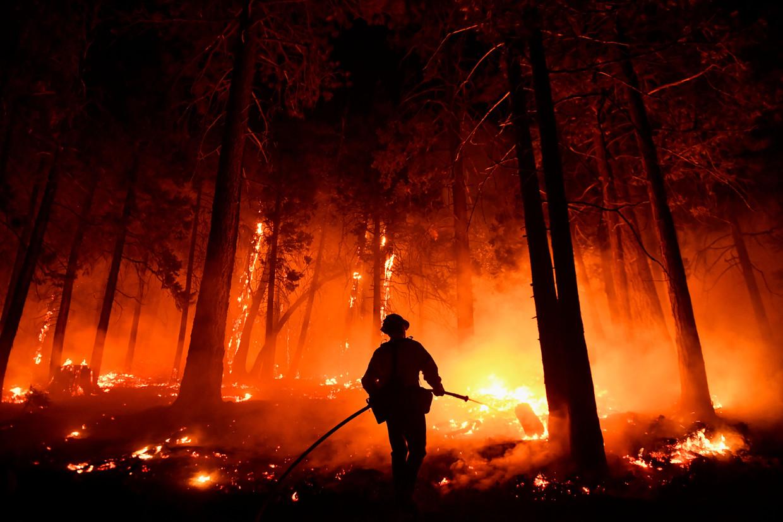 Brandweerman Bruce Wells gaat het vuur te lijf dat woedt in het Sequoia National Forest in de Sierra Nevada in Californië, 25 augustus. Beeld Patrick T. Fallon / AFP