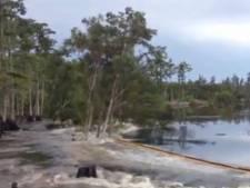 'Hongerige sinkhole' slokt bomen in paar seconden op