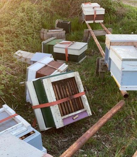 Tien bijenkasten omgeduwd in Mariaheide: 'Als de koningin sterft zijn tienduizenden bijen stuurloos'