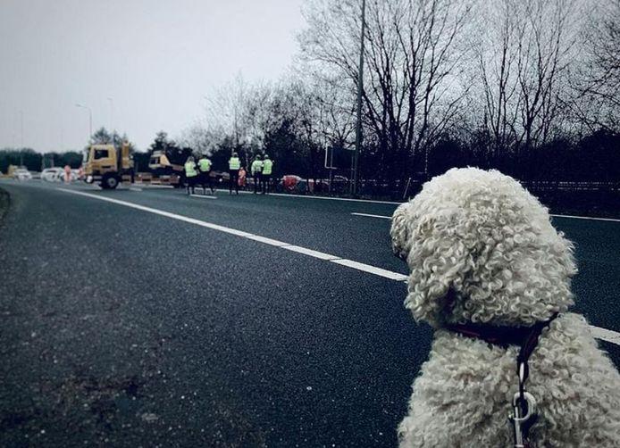 De hond kijkt toe na het ongeluk.