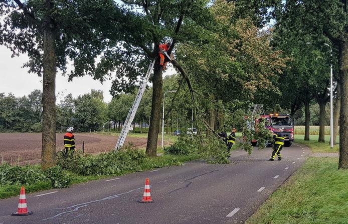 De afgebroken tak aan de Udenhoutseweg in Berkel-Enschot werd verwijderd door de brandweer.