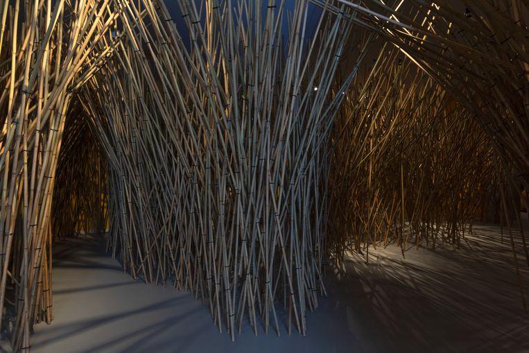 Het Bibber Bos door Bert Schoeren.  Beeld Heinz Aebi Photography