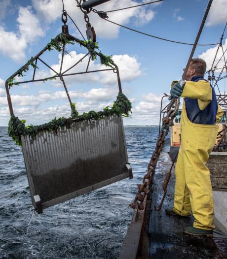 Zeeuwse visserij overleeft alleen door samen te werken
