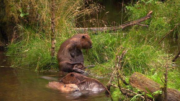 Een fragment uit de documentaire toont de snoezige diertjes tijdens een gezellig moment samen.
