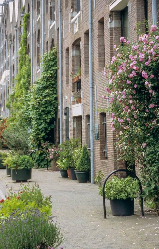 Sier je huis en straat met klimplanten en bloempotten.